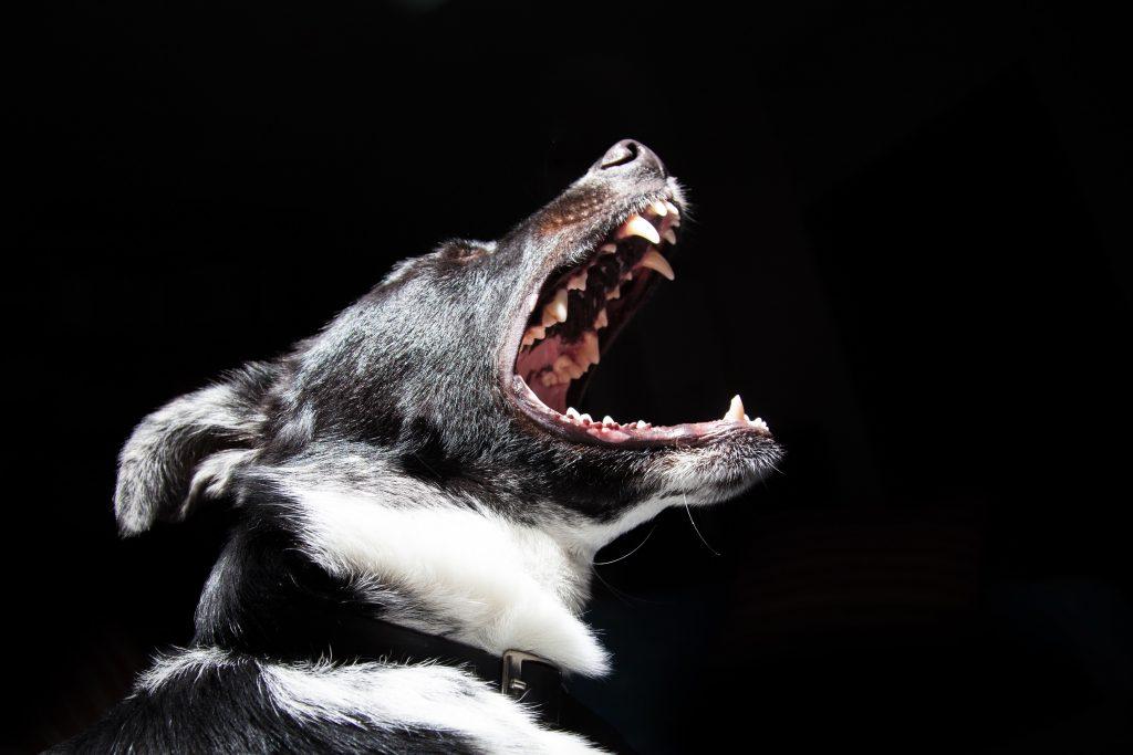ugriz psa odškodnina